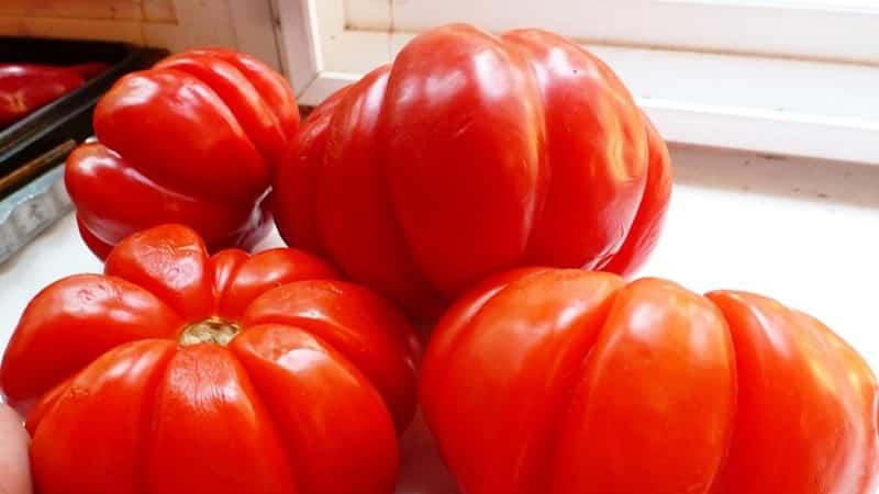 Томат Пузата Хата - описание сорта, характеристика, урожайность, отзывы, фото