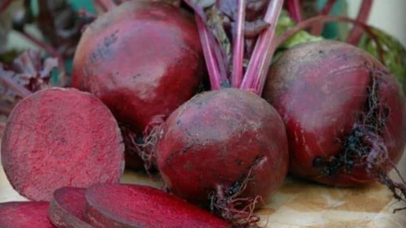 """Высокоурожайная столовая свекла """"Боярыня"""": выращиваем самостоятельно без особых хлопот"""