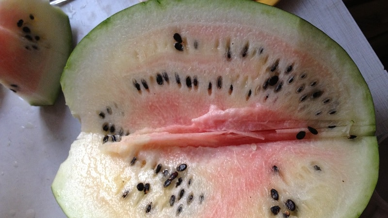 Дозревают ли арбузы в сорванном виде в домашних условиях