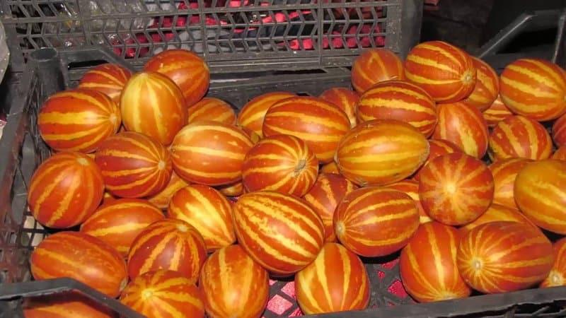 Экзотический фрукт с необычным внешним видом и интересным вкусом - дыня {amp}quot;Вьетнамская{amp}quot;