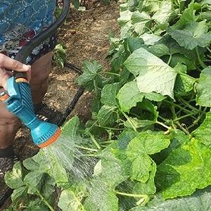 Пошаговая инструкция для начинающих огородников: как поливать огурцы правильно