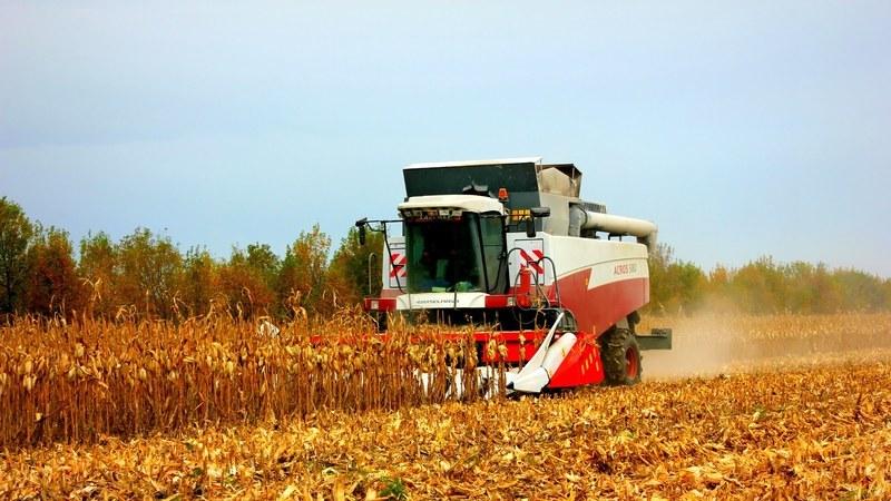 Как происходит уборка кукурузы на зерно: сроки и этапы процесса, дальнейшая переработка и хранение урожая