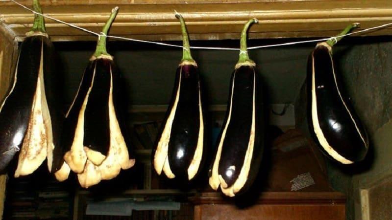 Как сушить баклажаны на зиму в домашних условиях правильно: 3 лучших способа