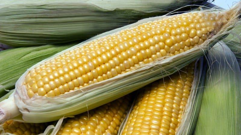 Можно ли заморозить консервированную кукурузу