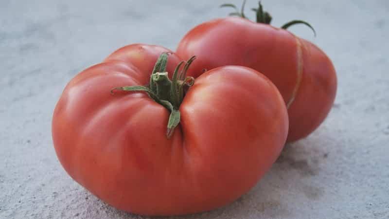 """Какую урожайность можно ожидать от томата """"Медовый"""" в открытом грунте"""