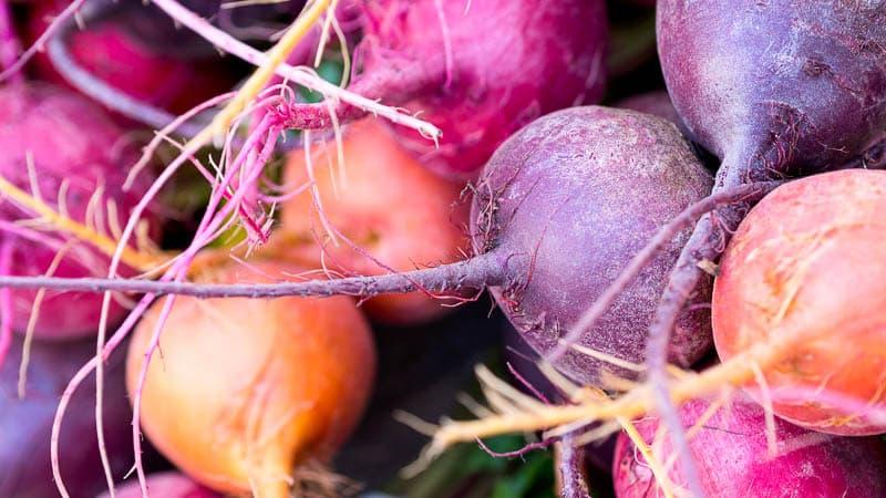 Когда убирать свеклу с грядки на хранение: собираем урожай вовремя