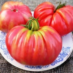 """Как правильно выращивать и куда применять томат """"Розамарин фунтовый"""""""