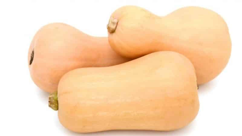 """Голландский раннеспелый гибрид тыквы """"Матильда"""": выращиваем до 15 кг плодов с квадратного метра"""