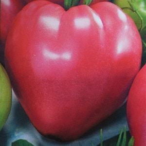 Стабильный в урожайности и устойчивый к болезням томат {amp}quot;Сахарный бизон{amp}quot;: характеристика и описание сорта
