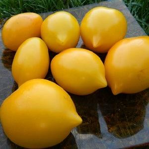 Яркое солнечное лекарство прямо с грядки: чем полезны желтые помидоры и какие в них содержатся витамины и минералы