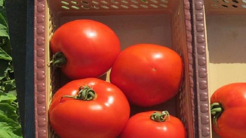 """Продуктивный гибрид с отличными вкусовыми качествами - томат """"Флорида"""" и его преимущества"""