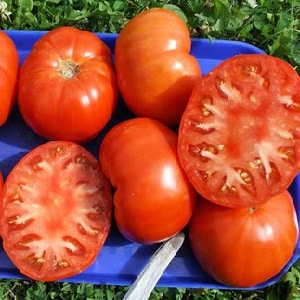 """Насколько томат """"Вечный зов"""" устойчив к болезням и что может увеличить его урожайность"""