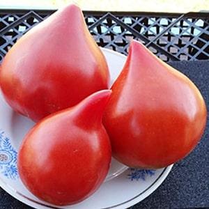 """Немецкий сорт томата """"Фатер рейн"""" - идеален для приготовления салатов, сока, кетчупа и различных соусов"""