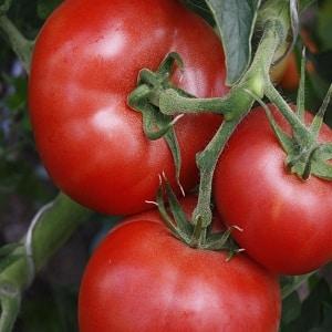 """Замечательные помидоры для теплиц и парников: томат """"Кукла Маша"""""""
