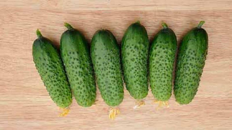 """Перспективный и высокоурожайный гибрид огурцов """"Кибрия"""", легкий в уходе и приятный на вкус"""