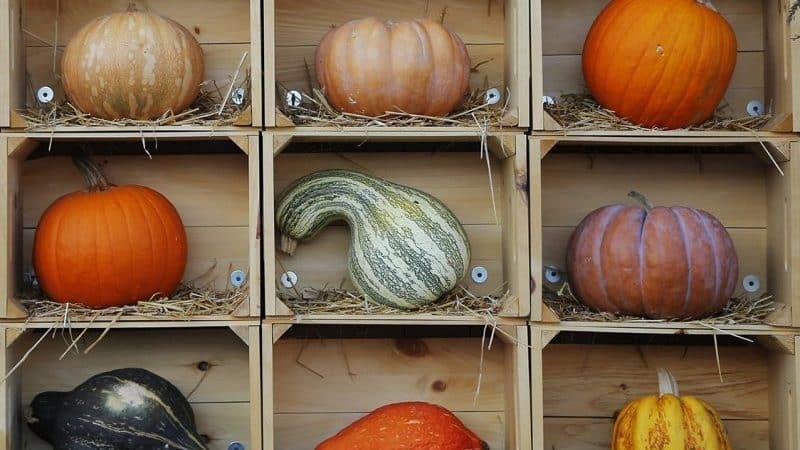 Как хранить тыкву в домашних условиях в квартире: создаем оптимальные условия и сохраняем овощ свежим на зиму