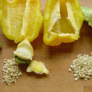 Как собрать семена перца в домашних условиях: инструкция по правильной заготовке посевного материала