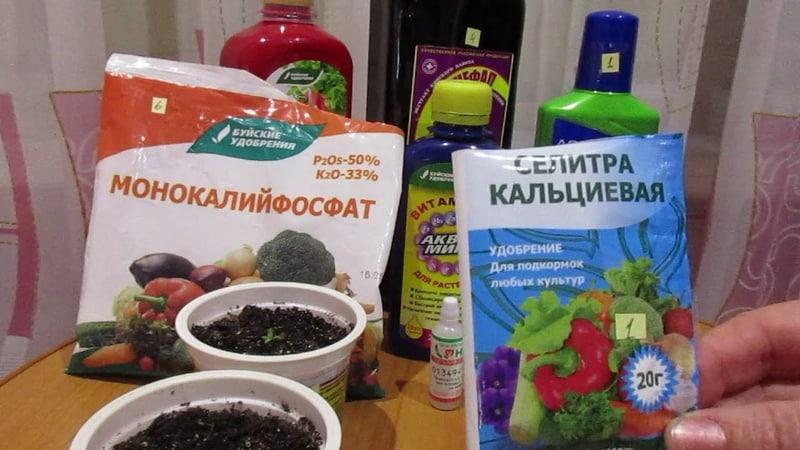 Для чего нужны азотные удобрения для огурцов в теплице, какие бывают и как их правильно вносить