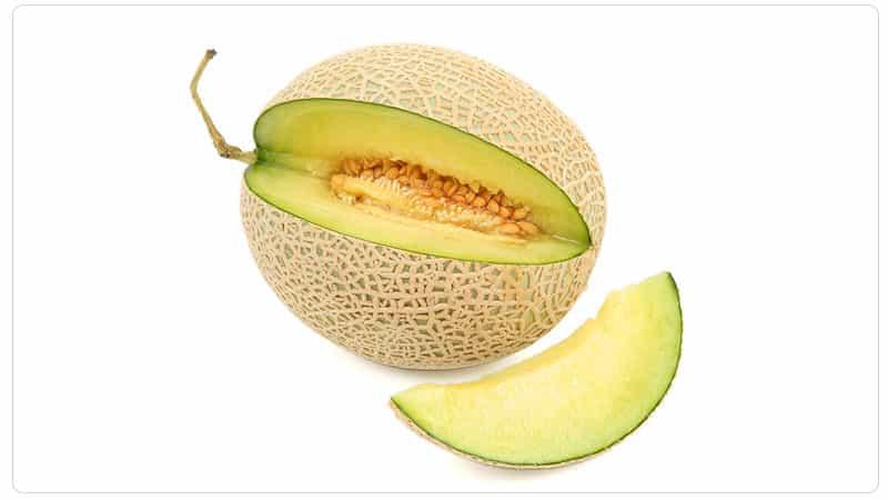 Что делать, если дыня не дозрела: правила хранения для поспевания плодов и советы по выбору