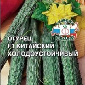 """Гибрид огурцов """"Китайский холодоустойчивый f1"""" для выращивания в регионах с суровым климатом"""