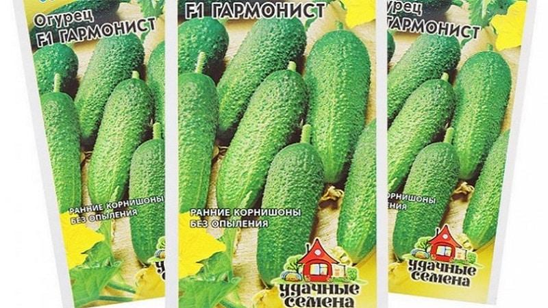 """Как выращивать огурцы """"Гармонист"""" и чем они хороши"""