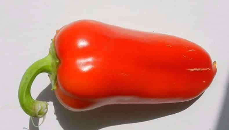 """За что дачники любят перец """"Ласточка"""": характеристика и описание сорта, его плюсы и минусы"""