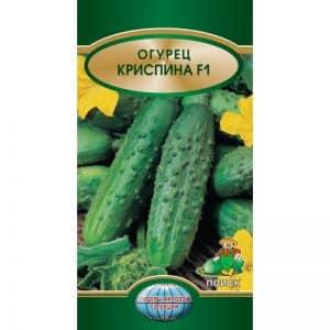 """Неприхотливый, урожайный и вкусный огурец """"Криспина"""" от голландских селекционеров"""
