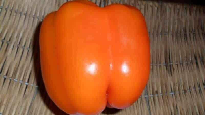 """Как правильно выращивать урожайный перец """"Сибирский бонус"""" с яркими и невероятно вкусными плодами"""