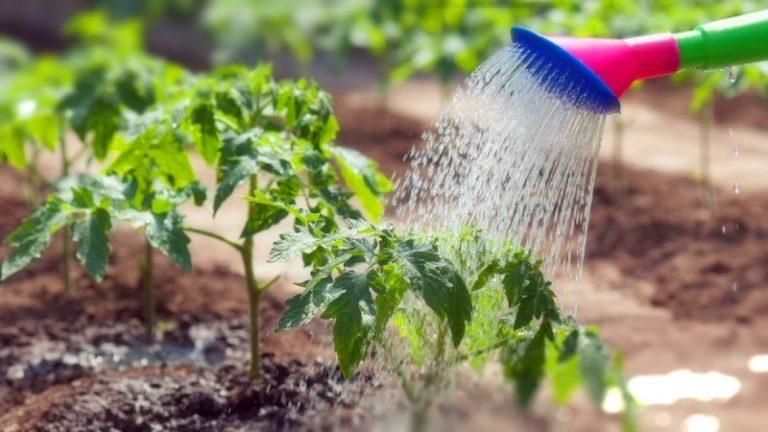 почему в теплицах урожайность выше