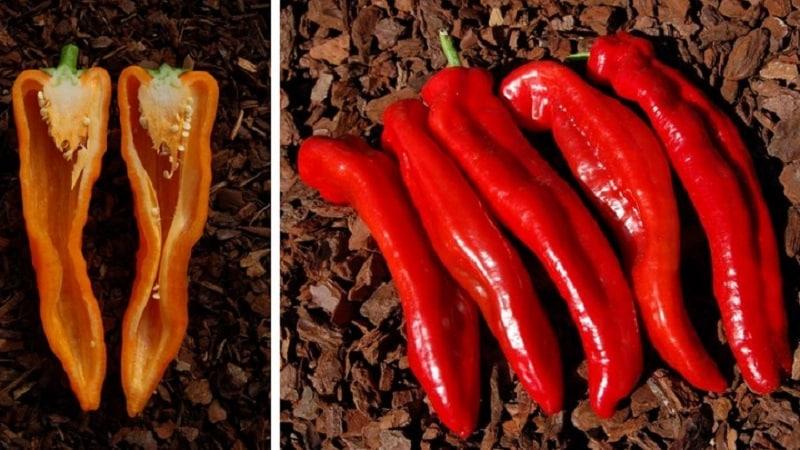 """Рекордсмен по содержанию витаминов - сладкий перец """"Рамиро"""" с экзотическим внешним видом"""