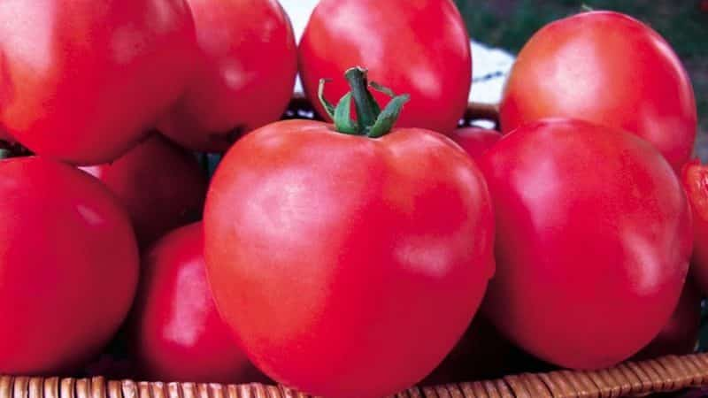 """Серия томатов """"Малиновое чудо"""": чем они так хороши, почему их стоит выращивать и как это сделать правильно"""