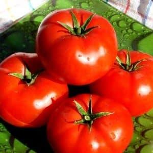 """Подарок от голландских селекционеров - томат """"Президент"""": подробное описание гибрида и секреты ухода за ним"""