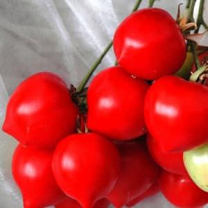 Гибрид, который советуют дачники - томат Тарасенко 2 и его положительные качества