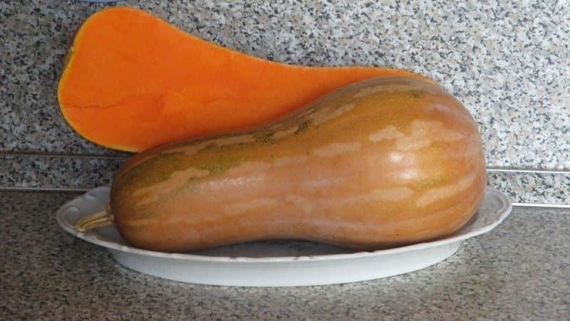 """Выращиваем на своем участке среднеспелую тыкву """"Гитара"""" с крупными плодами для длительного хранения"""