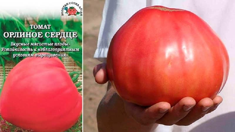 Высокий урожая и крупные плоды с деликатным вкусом: томат {amp}quot;Орлиное сердце{amp}quot; - как вырастить самостоятельно без хлопот