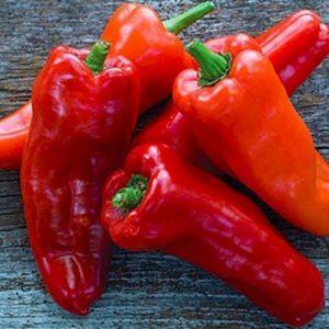 """Обзор толстостенного и высокоурожайного перца """"Бивень"""": что это за сорт и как его вырастить на своем участке"""