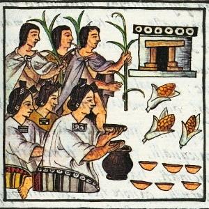 Что представляет собой кормовая кукуруза, как отличить её от пищевой и куда применять