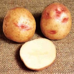 Уникальный на вид и отличный на вкус сорт картофеля Пикассо из Голландии