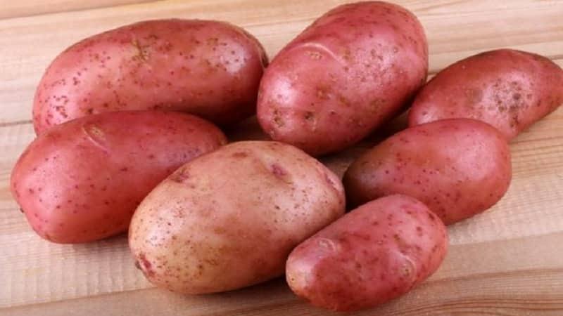 """Неприхотливый сорт картофеля """"Крымская роза"""" для выращивания в жарком климате"""