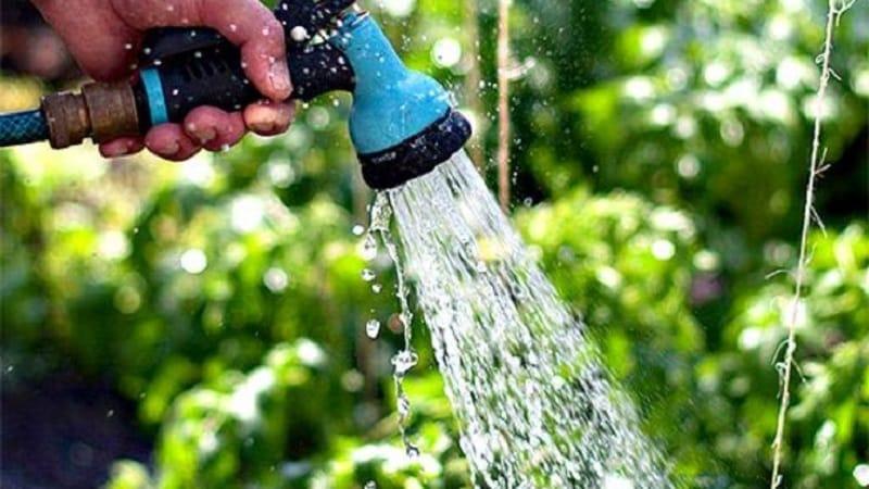 Как поливать огурцы в теплице из поликарбоната: инструкция и основные правила