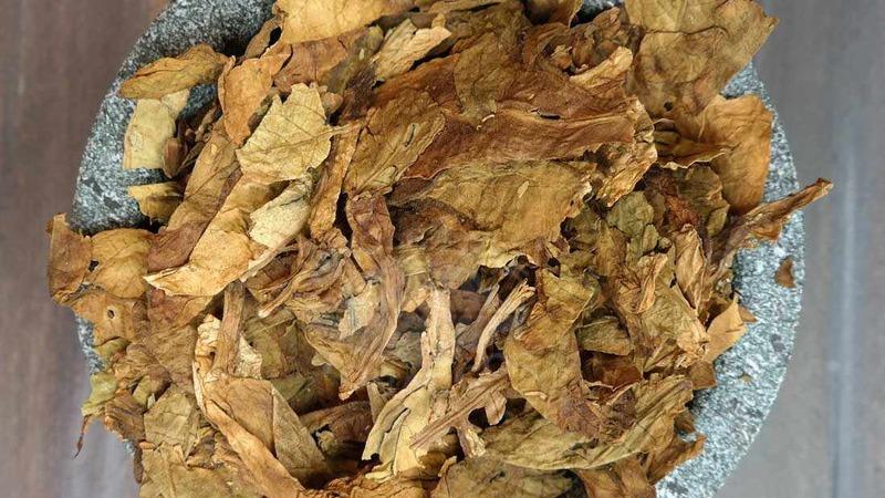 """Выращиваем из семян табак """"Турецкий"""": инструкция для начинающих, особенности сорта"""