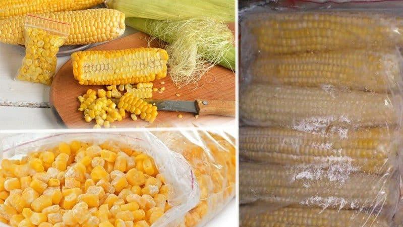 Где и как хранить кукурузу в початках в домашних условиях: оптимальные условия и сроки хранения