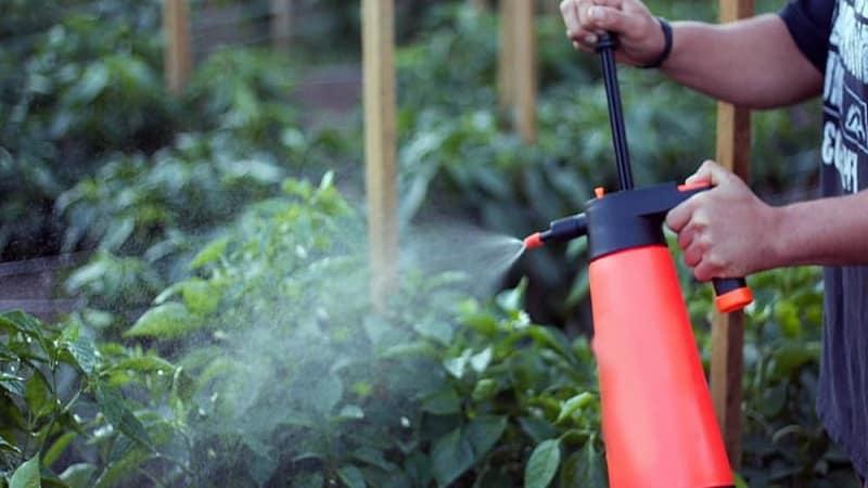 Как бороться с гнилью на кустах перца: советы бывалых огородников