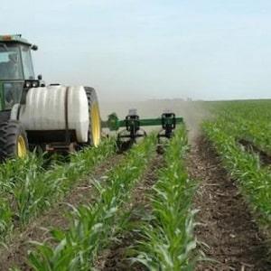 Как и чем подкормить кукурузу: лучшие составы и правила их внесения для получения богатого урожая