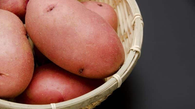 """Среднеранний столовый сорт картофеля """"Лаура"""" с превосходным вкусом и ароматом"""