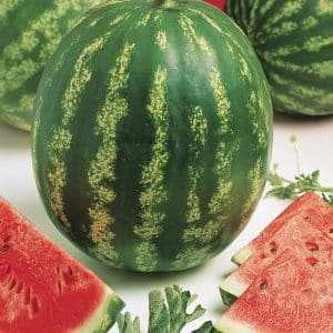 Арбуз Кримсон Свит описание и происхождение сорта выращивание с фото