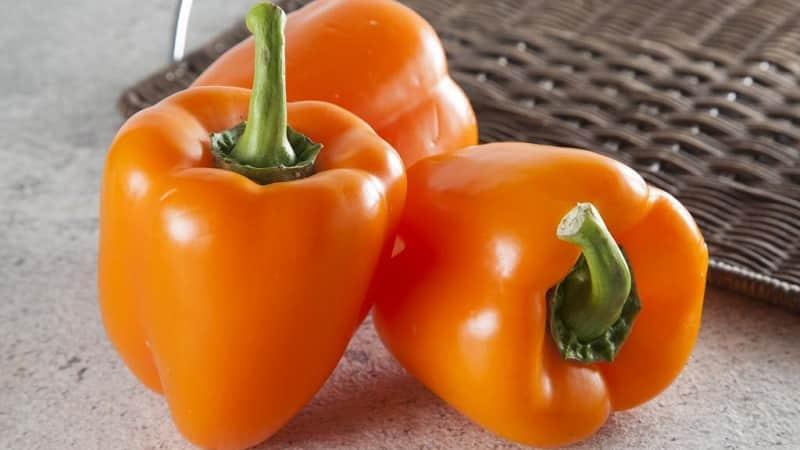 Лучшие сладкие сорта перцев для теплиц Подмосковья