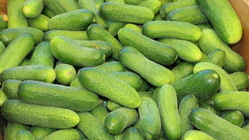 """Вкусные и легкие в выращивании огурцы """"Луховицкие"""""""