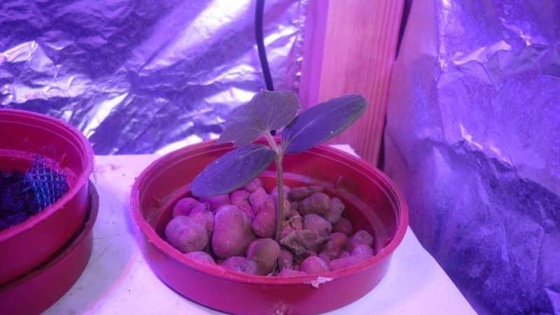 """Как правильно вырастить огурцы """"Маринда f1"""" на своем участке и получить богатый урожай"""