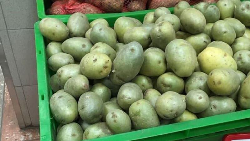 Можно ли есть позеленевшую картошку, опасна ли она для организма человека и почему
